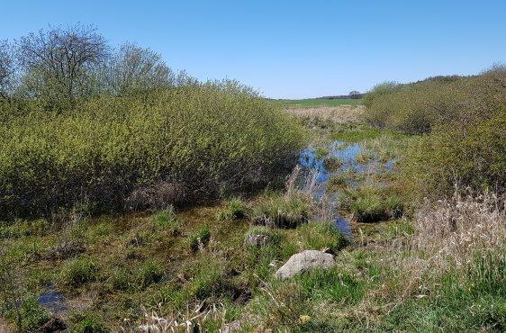 Geplante Sanierung des Kleingewässers südwestlich von Barendorf