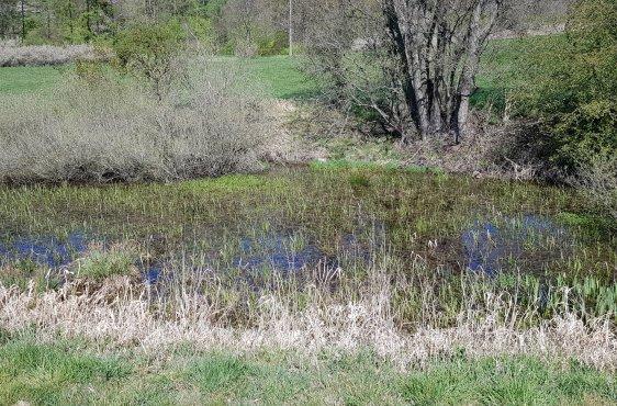 Geplante Sanierung des Kleingewässers im Grünland östlich Sternkrug
