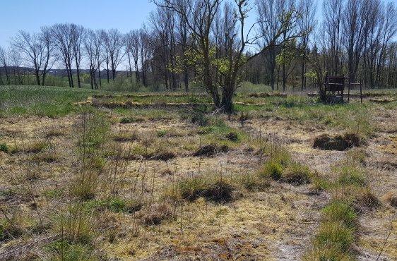 Geplante Neuanlage eines Kleingewässers im Bereich des alten Melkstandes westlich von Gressow