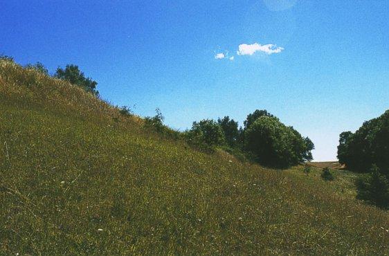 Seitental der Grünzer Berge mit Trockenrasen (Bild mit freundlicher Genehmigung (c) Demmler Verlag)