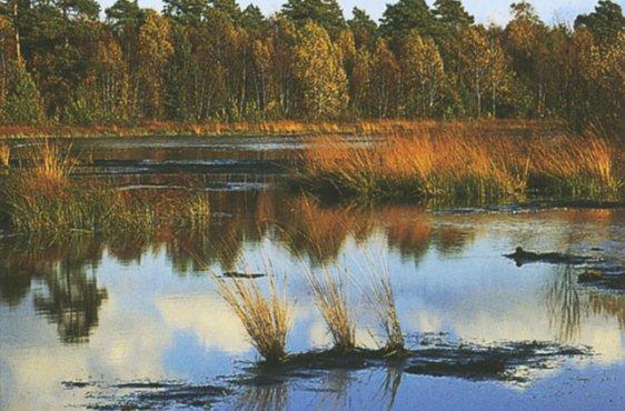 Schwingrasen am Großen Moorsee (Bild mit freundlicher Genehmigung (c) Demmler Verlag)