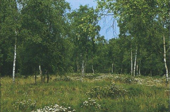 Sumpfporstfläche im nördlichen Teil (Bild: © Demmler Verlag)