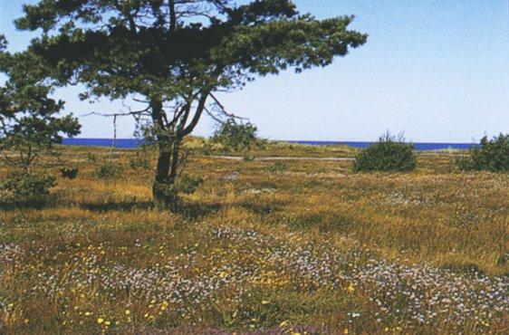 Sandmagerrasen mit Silbergras, Habichts- und Heidekraut (Bild mit freundlicher Genehmigung © Demmler Verlag)
