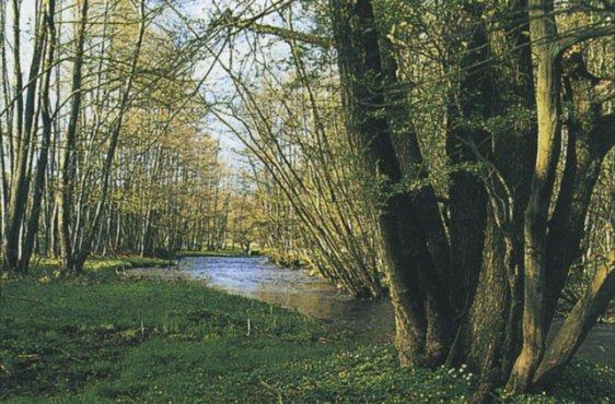 Quellige Uferbereiche der Ostpeene (Bild mit freundlicher Genehmigung (c) Demmler Verlag)