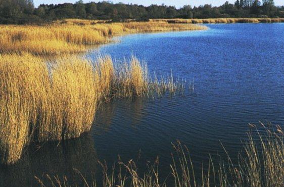Nordwestufer des Spyckerschen Sees (Bild mit freundlicher Genehmigung (c) Demmler Verlag)