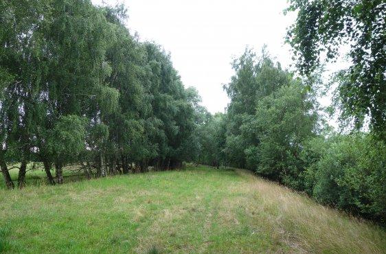 Kernbereich der einstigen innerdeutschen Grenze: Der Kolonnenweg wurde rückgebaut. Seitlich verläuft der Sperrgraben, die Gehölze konnten erst nach 1989 aufwachsen.