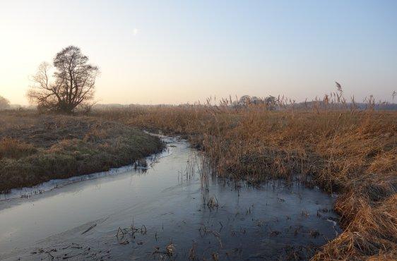 Winteraspekt der Delvenau mit halbseitiger Gewässerunterhaltung, links im Bild ist Maisstoppelacker bis unmittelbar ans Flussufer zu sehen