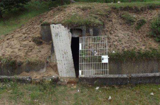 Die Bunker vor den Bauarbeiten stellen auch hinsichtlich der Verkehrssicherheit ein Risiko dar. Zudem gelangen auch Prädatoren hinein und stellen unter Umständen eine Gefahr für die Fledermäuse dar.