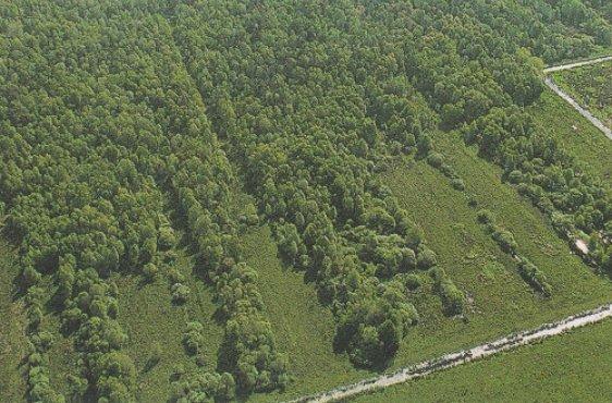 Verlandete Torfstiche im Grenztalmoor (Bild mit freundlicher Genehmigung © Demmler Verlag)