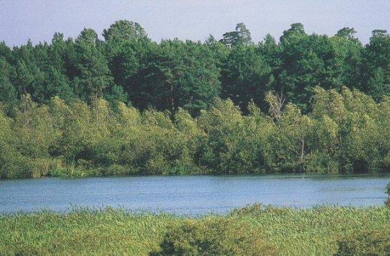 Blick über den Restsee auf die mit Moorbirken bestockte Halbinsel am Ostufer (Bild mit freundlicher Genehmigung © Demmler Verlag)