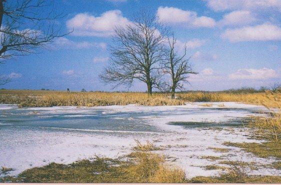Vegetationsinseln im Zentrum des Wangeliner Sees (Bild mit freundlicher Genehmigung © Demmler Verlag)