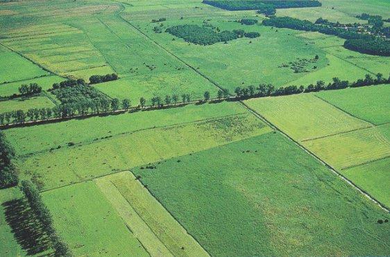 Blick von Südwesten über das Moor; in der Mitte der Zehlendorfer Damm