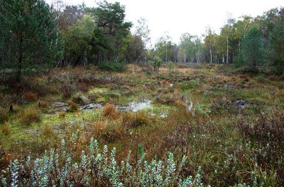 Großes Moor bei Darze