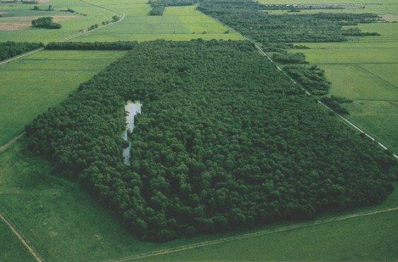 """Blick von Nordosten, im intergrund und rechts das NSG """"Landgrabenwiesen bei Werder (Bild mit freundlicher Genehmigung © Demmler Verlag)"""
