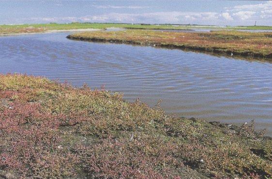 Freesendorfer Wiesen und Freesendorfer See bei Hochwasser (Bild mit freundlicher Genehmigung © Demmler Verlag)