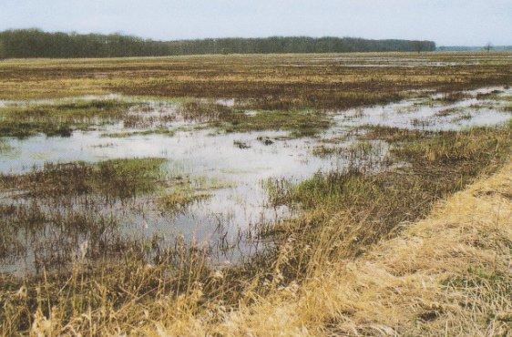 Überflutete Wiesenflächen im Frühjahr (Bild mit freundlicher Genehmigung © Demmler Verlag)