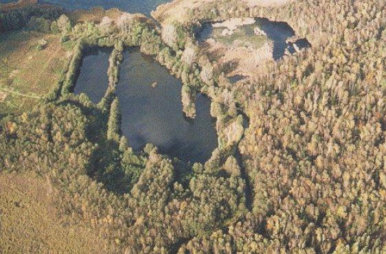 Kalkflachmoor am Schaalsee (Bild mit freundlicher Genehmigung © Demmler Verlag)
