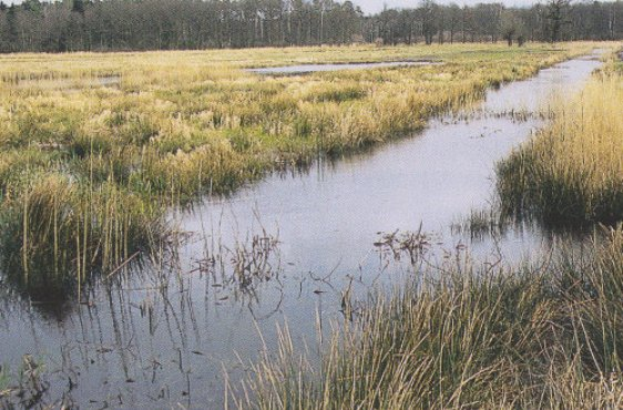 Hauptgraben bei Frühjahrshochwasser (Bild mit freundlicher Genehmigung © Demmler Verlag)