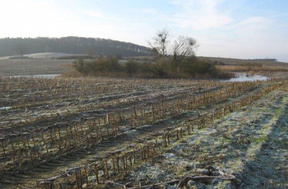 Postbruch nach Verschluss der Entwässerungsleitung im Januar 2015