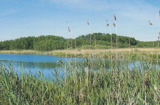 Blick über den Kuckssee auf das bewaldete Westufer (Bild mit freundlicher Genehmigung © Demmler Verlag)
